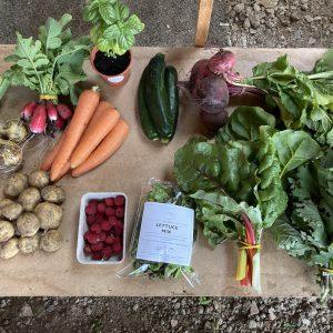 Fanfield Farm Veg Box East Sussex
