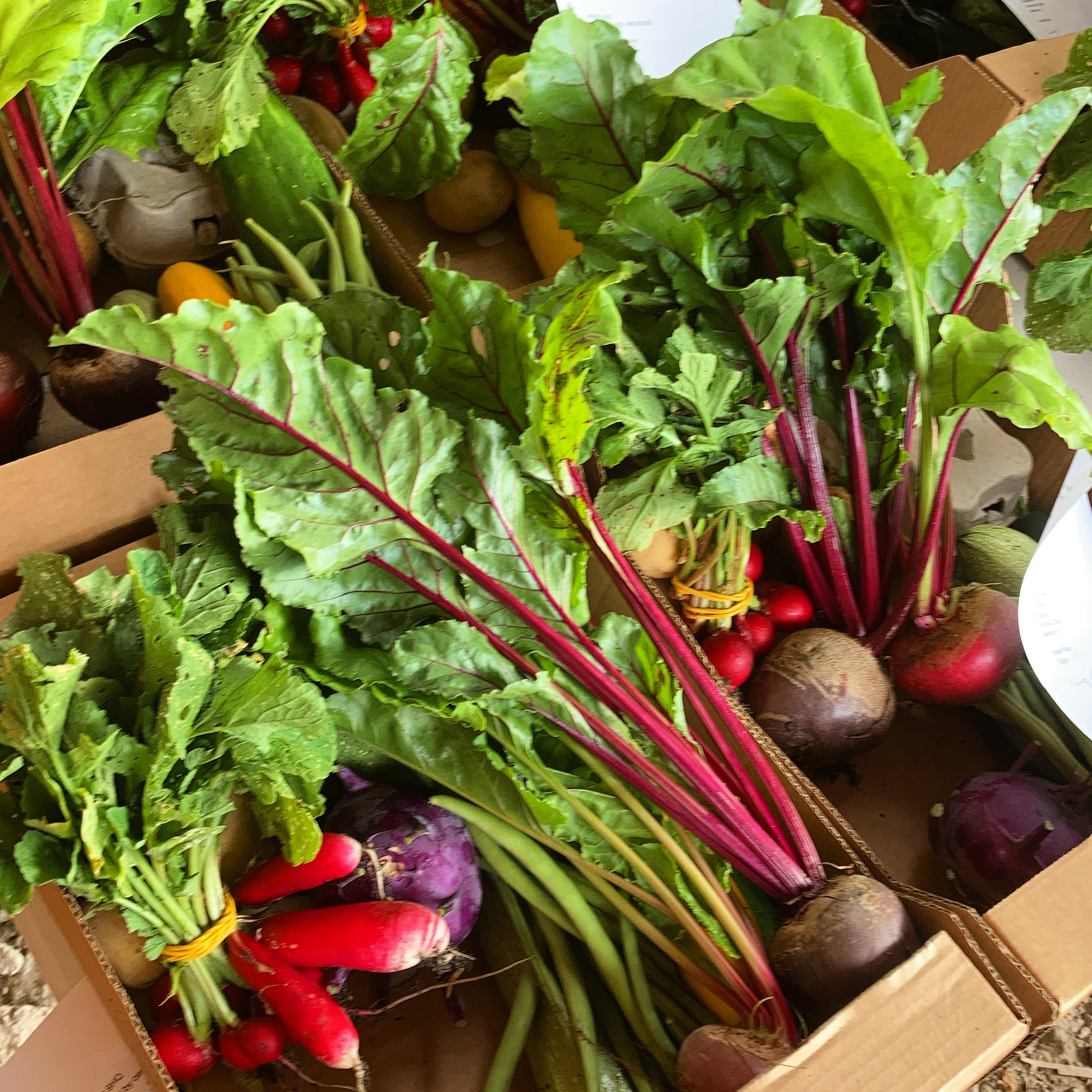 Fanfield Farm Veg Box 2