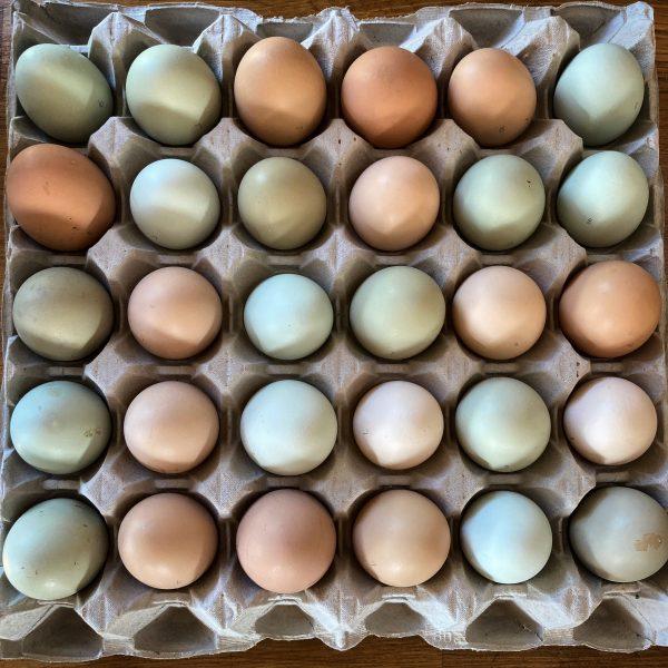 Fanfield Farm Free Range Eggs