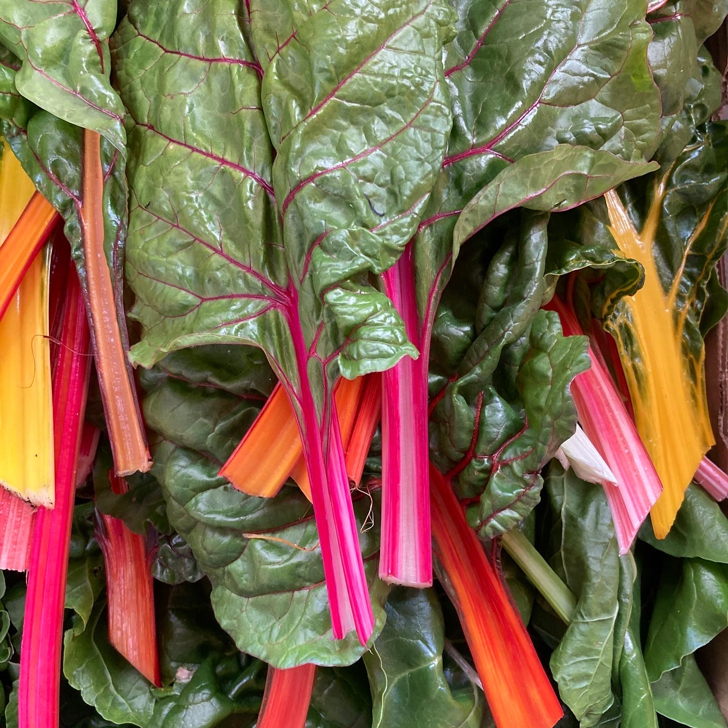 Fanfield Farm Chard