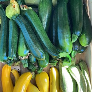Fanfield Farm Courgettes