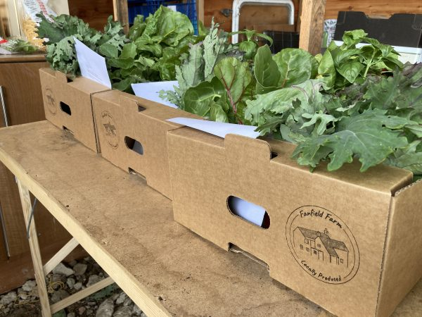 Fanfield Farm Veg Box 4