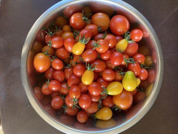 Fanfield Farm Organic Tomatoes