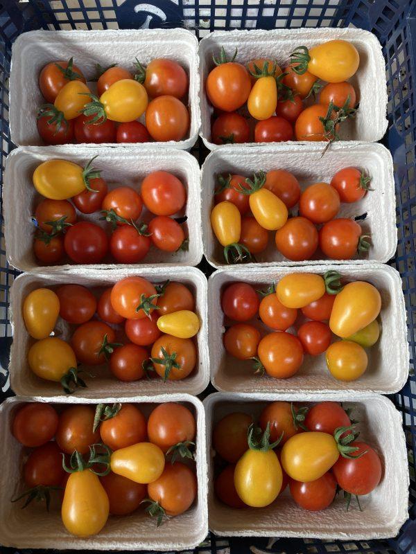 Organic Tomato Punnet