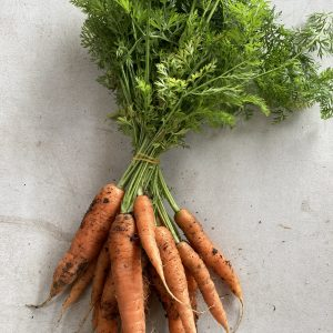 Organic Carrots Bunched Fanfield Farm