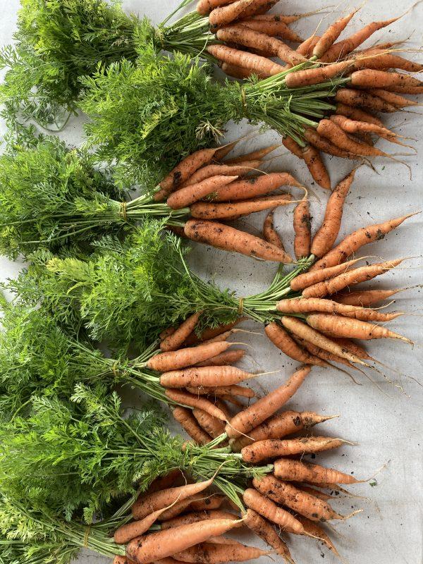 Fanfield Farm Organic Carrots