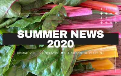 Summer News from Fanfield Farm