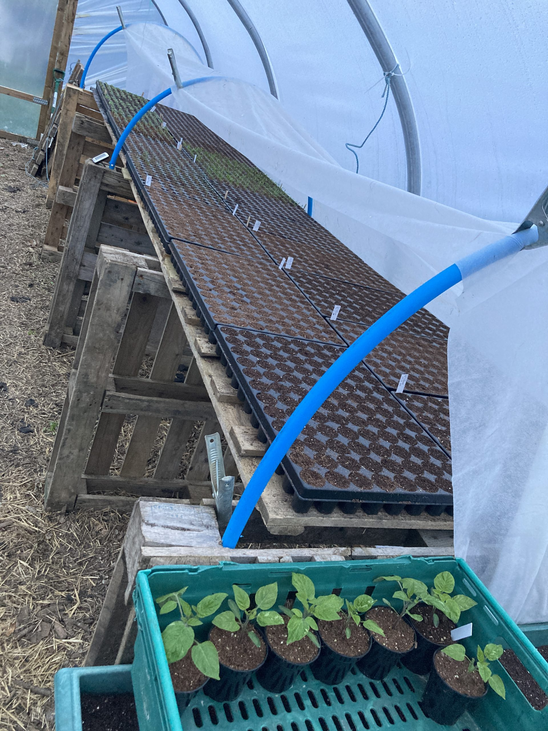 Propagation Space in Polytunnels