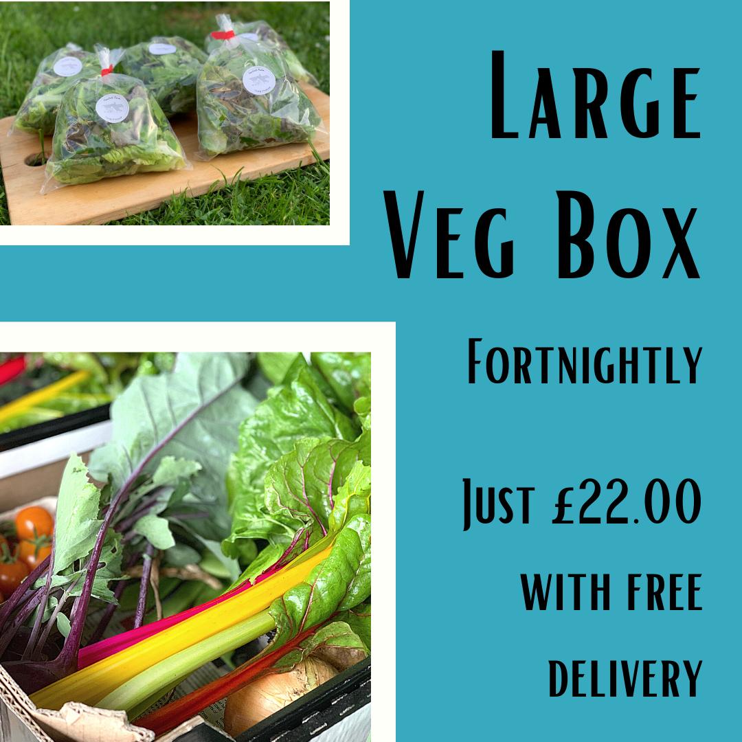 Large Veg Box Fortnightly