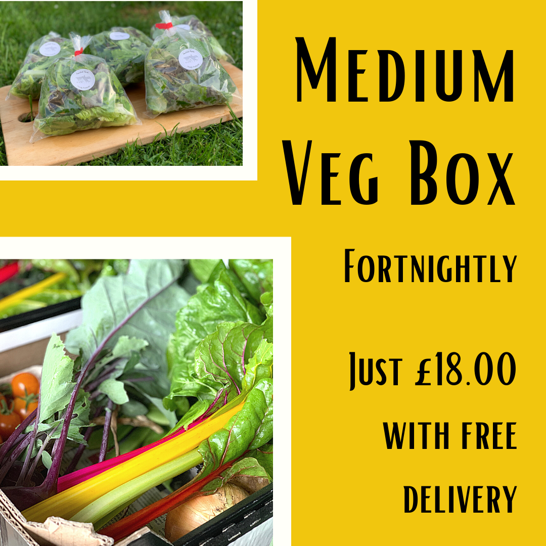 Medium Veg Box Fortnightly